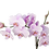 Thumbnail: Orchid 2 branches