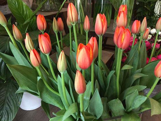 Bouquet : Tulip