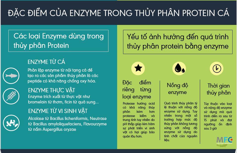 Đặc điểm của từng loại enzyme trong thủy phân protein cá