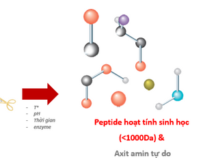 Tác động tích cực của peptide hoạt tính sinh học và tiềm năng thay thế bột cá trong thức ăn chăn nuô