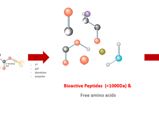Multifunctional activity of bioactive peptides and their positive impacts on animal body
