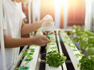 Phân bón từ dịch đạm thuỷ phân - nguồn dinh dưỡng vượt trội và bền vững cho cây trồng