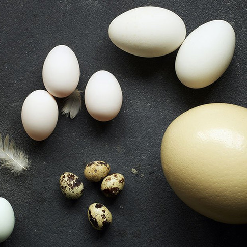 Egg shell quality