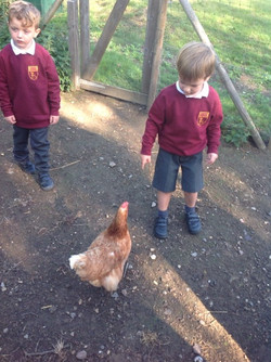 Caring for our chickens