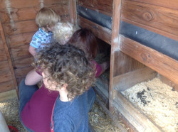 Looking after the chickens