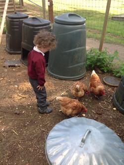 Anstey Rescue Chickens