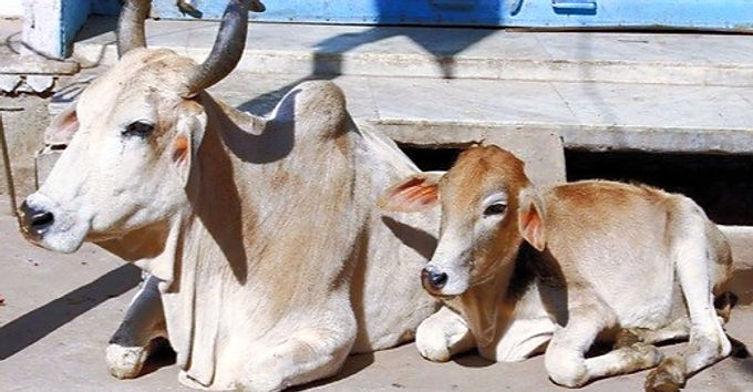 ANIMALS TOO CAN FEEL THE PHYSICAL AND MENTAL PAIN: GUJARAT HIGH COURT