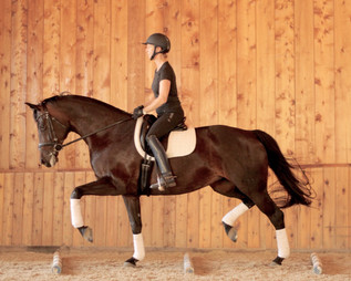 Dressage Training Southern California