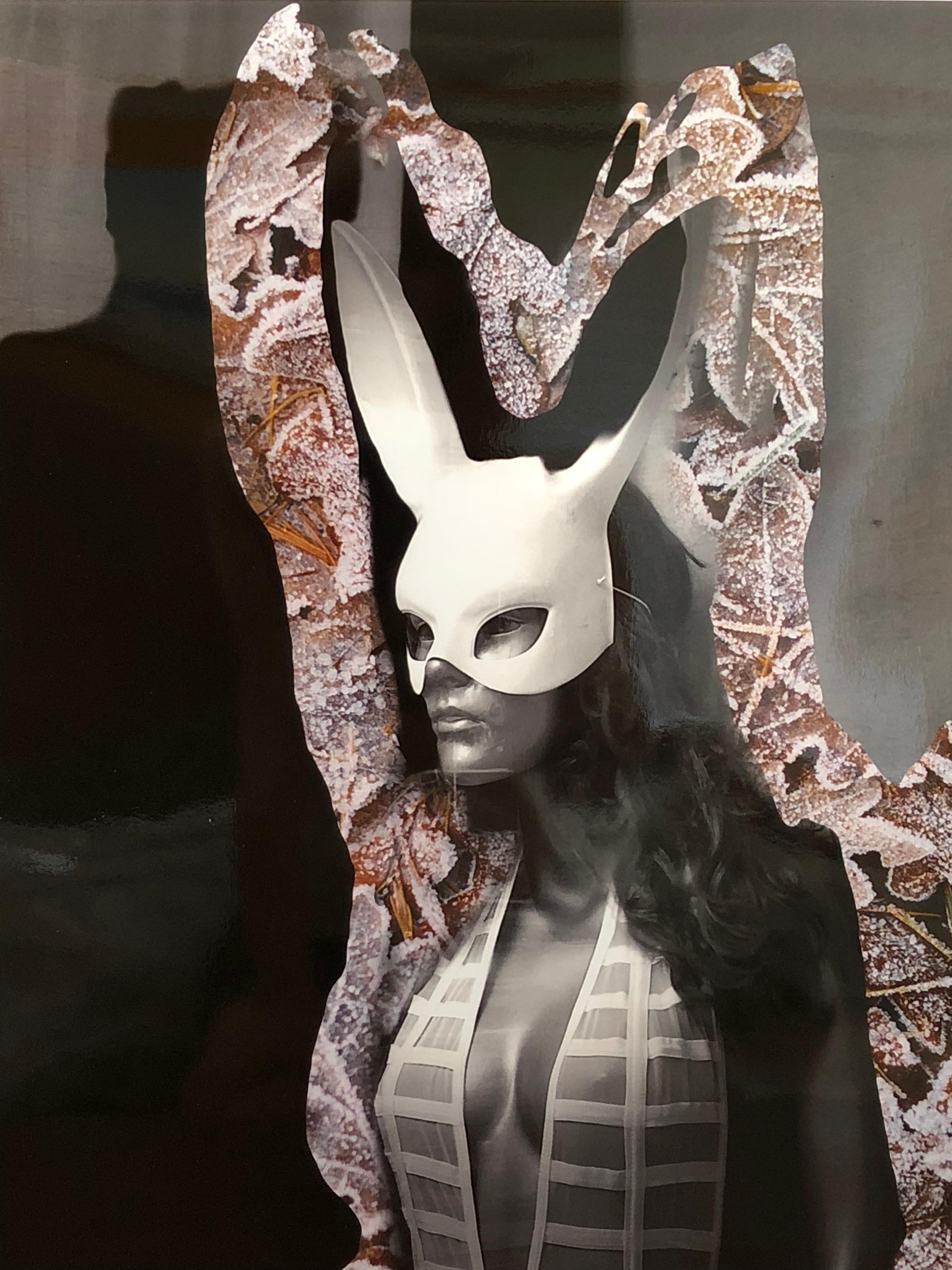 L.A. Bunny