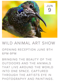 Wild Animal Art Show