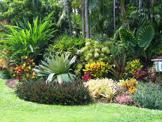 Tropical Landscaping (Foliage, Shrubs, P