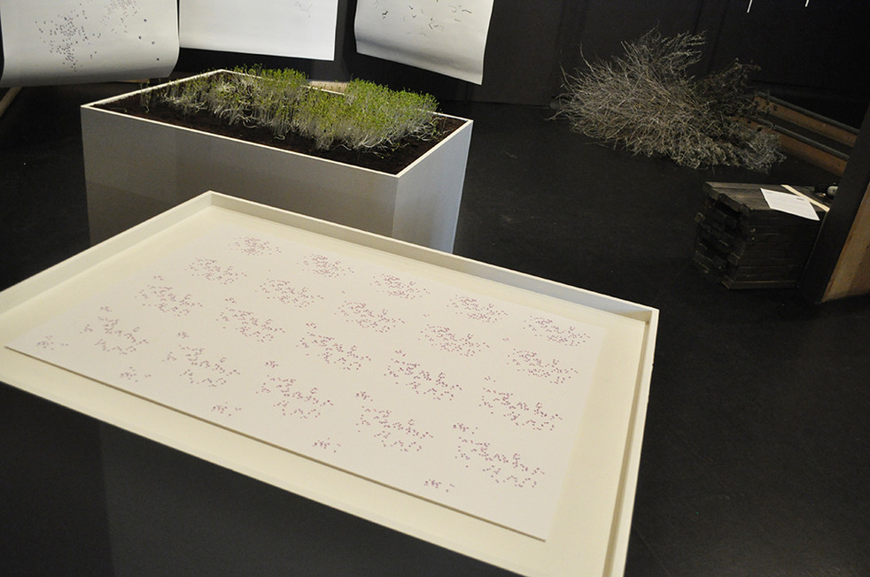 Installation Shot: Scatter Acrylic on paper, cress, soil, painted mdf box, pencil and charcoal on paper.