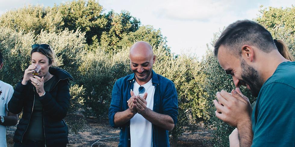 Olive Grove | Tasting & Picnic