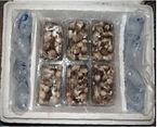 Mushroom Transport.jpg