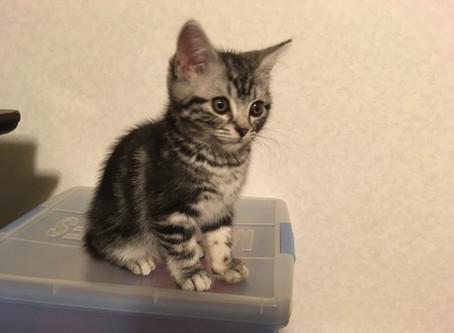 ネコの動物学ー伴侶動物としてのネコの感覚