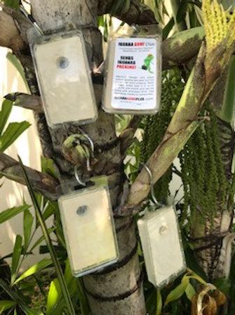 Iguana Gone Plus Hangers