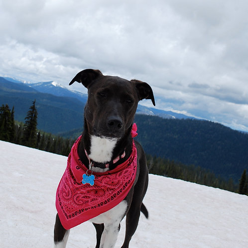 Dog Day Trail Pass
