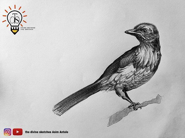 """""""I always wonder why birds choose to sta"""