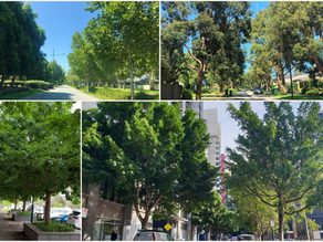 Verve Projects and Urban Greening – Our Approach