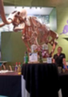 Florida Musume of Natural History