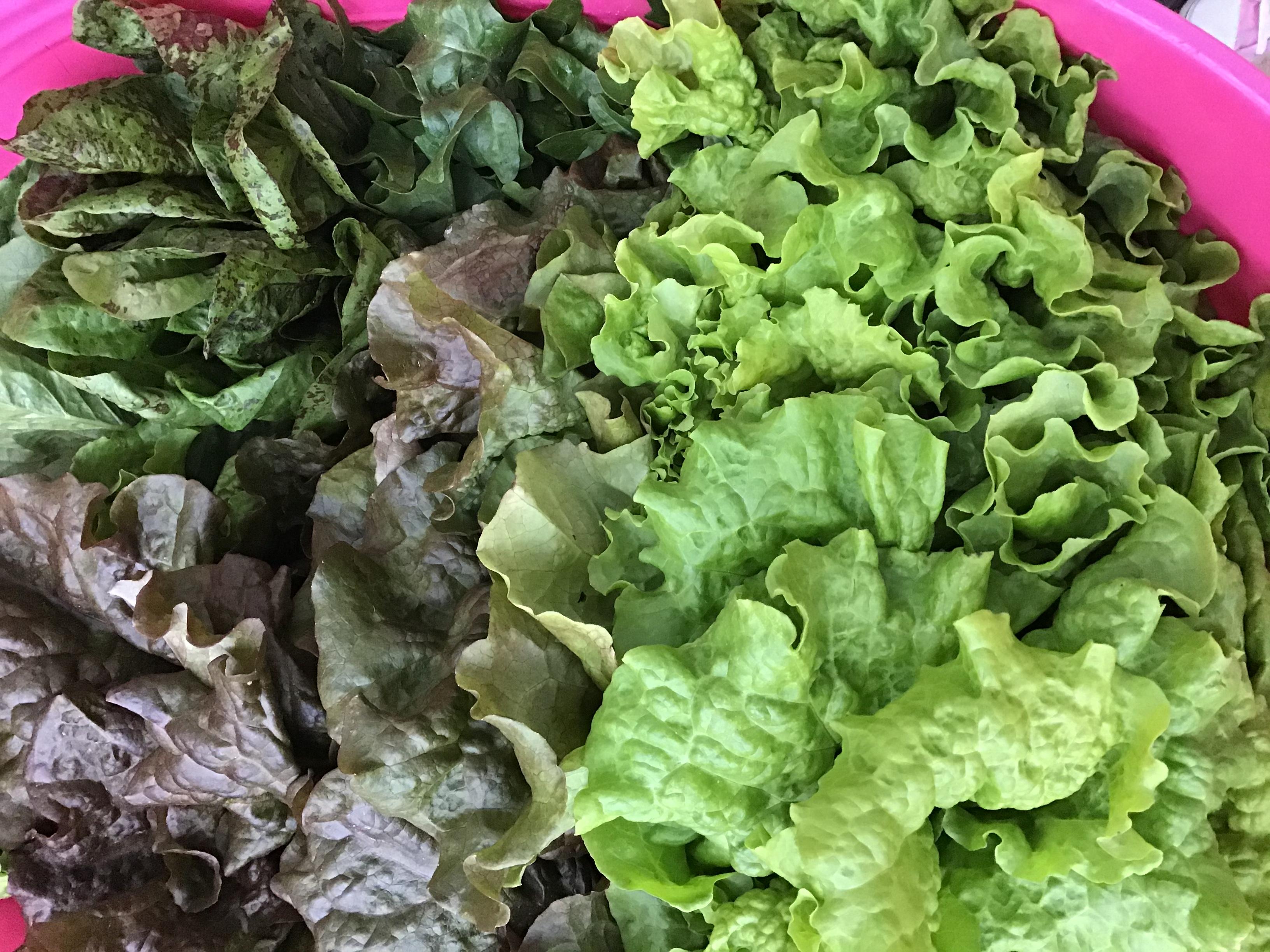 Organic and Local Veggies