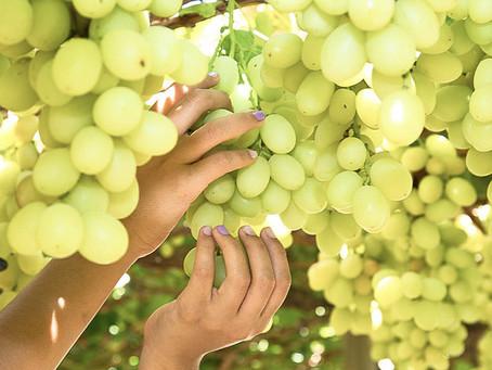 Covid-19: agricultura y seguridad alimentaria