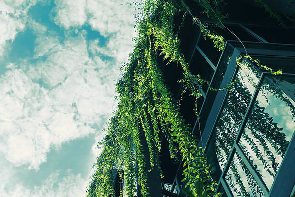 Green Ivy from the Roof