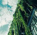 Hera verde do telhado