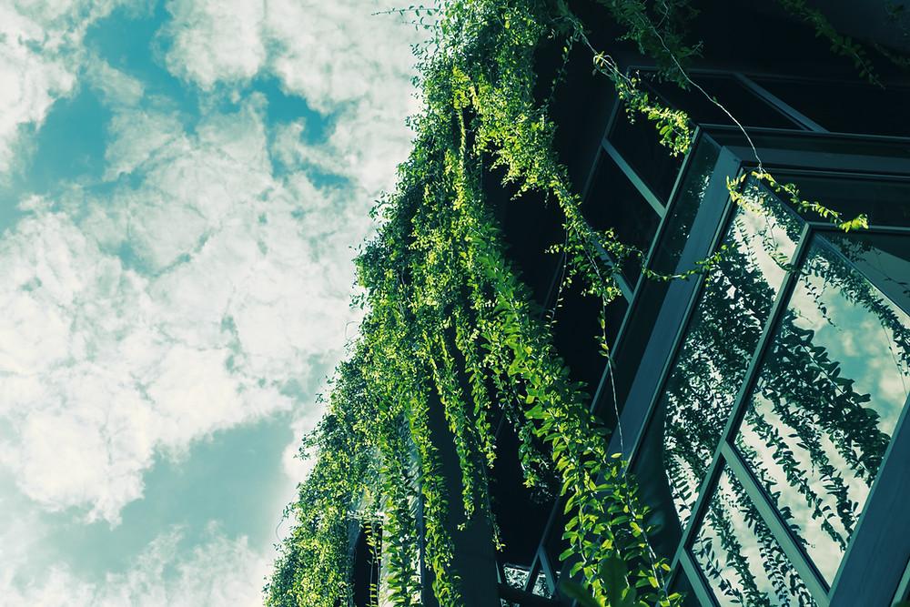 בניה ירוקה חכמה | אוורגין