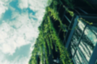 Green Ivy ze střechy