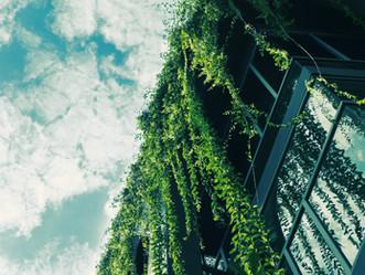"""""""Green go"""" Nouvelle plateforme d'hebergement . Une Solution alternative à Airbnb, plus écologique !"""