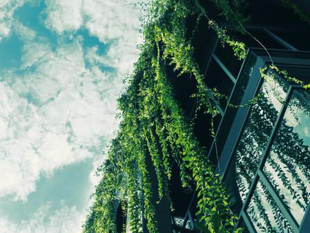 בניה חכמה ירוקה