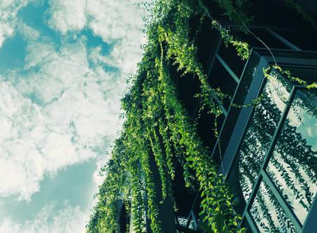 Urbanes Grün für die Stadt der Zukunft - Pilotgebiet Berliner Mitte