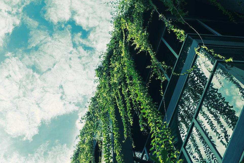屋根からグリーンアイビー