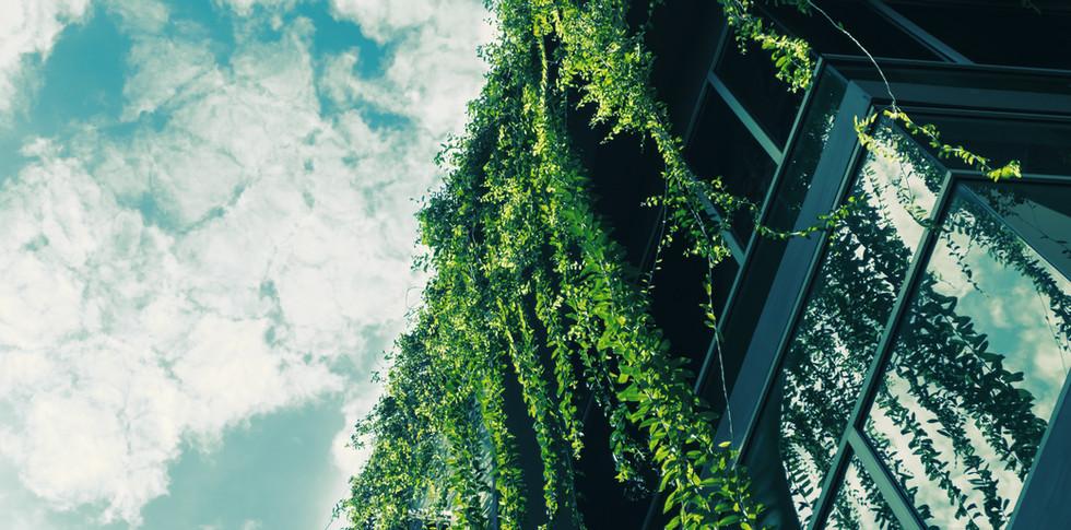 Ivy Green du toit