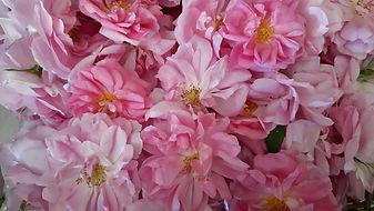 photo rose.JPG