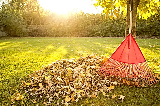 Healthy Lawn Fall Tips | Caramanico Landscape
