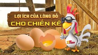Lợi ích lòng đỏ trứng gà cho chiến kê khiến bạn phải ngạc nhiên