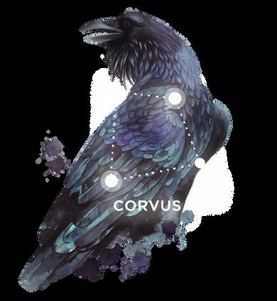 MiBimusic. corvus