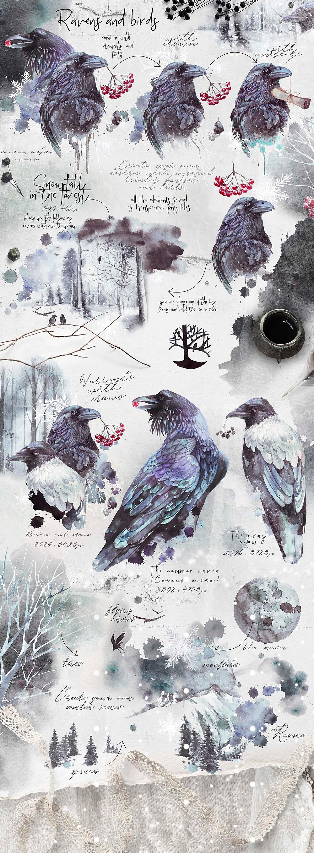 Ravens and crows watercolor