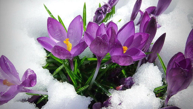 Imbolc - A time for new beginnings