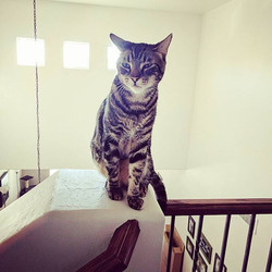 Niko sitting at the top of the stair well