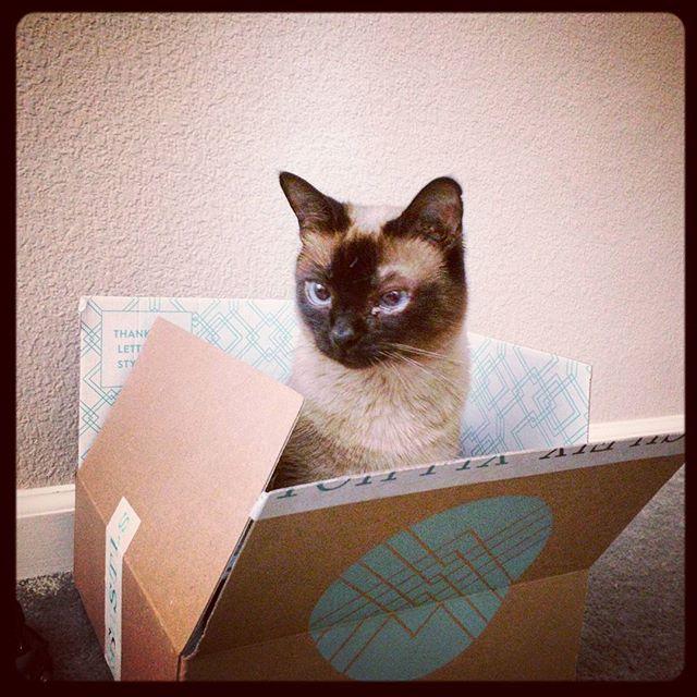 Maiya loves boxes #kitty #cat #catsofinstagram #sealpointsiamese #stitchfix #box #catinabox
