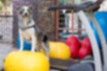 Exercise, Dog, Dogs, Fit, Rehab, Rehabilitation, Canine, Sport, Health, Injury, Physiotherapist, Physiotherapy, Gym, Training