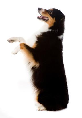 dog-begging-for-scraps-of-food.jpg