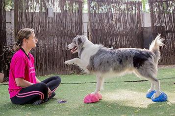 Dogs, Dog, Gym, Exercise, Rehabilitation, Rehab, Physiotherapy, Physiotherapist, Physio, Yoga, Injury, K9Yoga, Pods, Tricks, Fun
