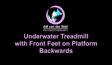 Exercise, Dog, Dogs, Fit, Rehab, Rehabilitation, Canine, Sport, Health, Injury, Physiotherapist, Physiotherapy, Gym, Training, Treadmil, Underwater Treadmil