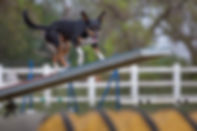 PetFit, Fitness4Pets, Physiotherapy, Physiotherapist, Physio, Dog, Dogs, Pet, Pets, Gym, Rehabilitation, Rehab, Operation, Injury, Surgery, Fit, Health, Fitness, Canine, Puppy, Sport, Agility, Flyball, Dry Land Sledding