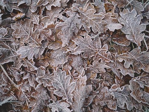 Gefrorene Blätter