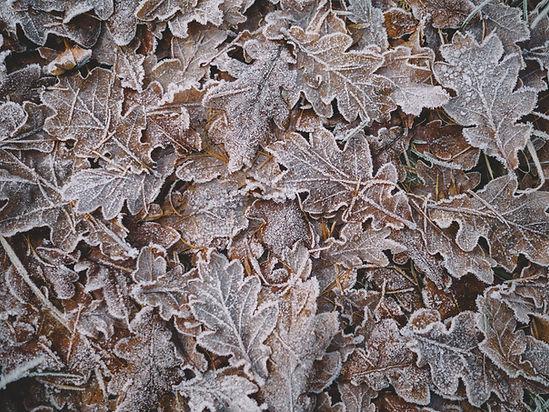 Замороженные листья